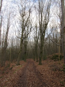 Woods near Maeshafn