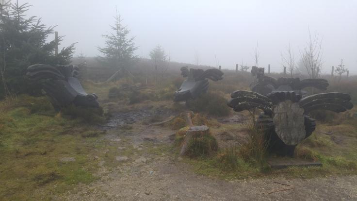 Black grouse trail Llandegla
