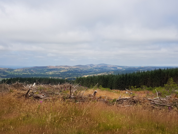 Moorland Trail route One Planet Adventure Llandegla