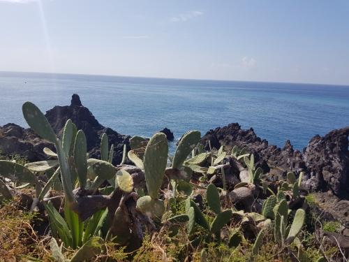 Coastline Funchal