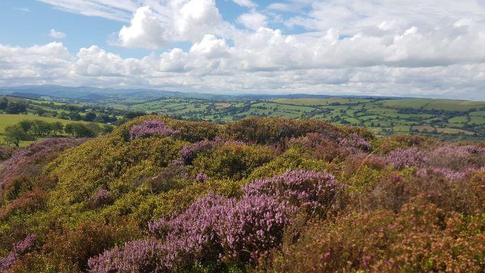 Bryneglwys Lantysilio mountain range