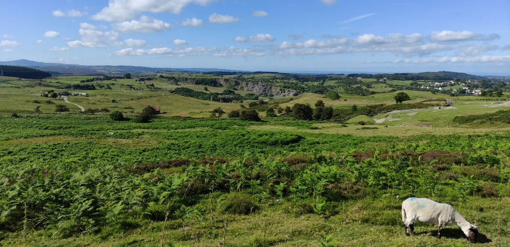 Esclusham mountain view and sheep, Wrexham, North Wales