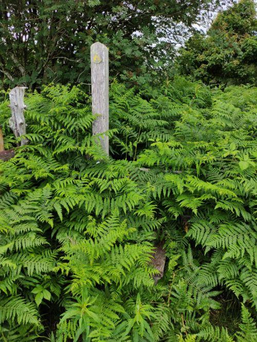 Overgrown stile walk Llandegla